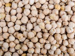 Export Chickpeas from Argentina