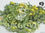 Инфракрасная сушильная камера для продуктов питания Sukhoviy - photo 7
